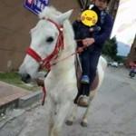福州での馬通学